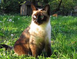 Кошка против кротов на участке