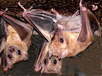 купить ультразвуковые отпугиватели летучих мышей