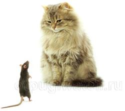 Как избавиться от мышей, крыс и других грызунов в квартире, на даче