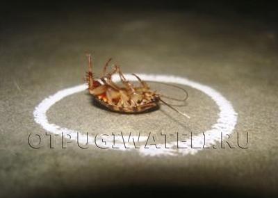 Как избавиться от тараканов, эффективные средства, Доставим сегодня