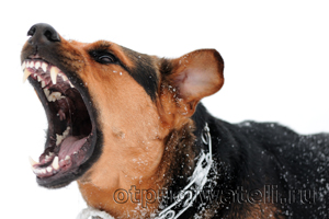 Агрессивные собаки - опасны